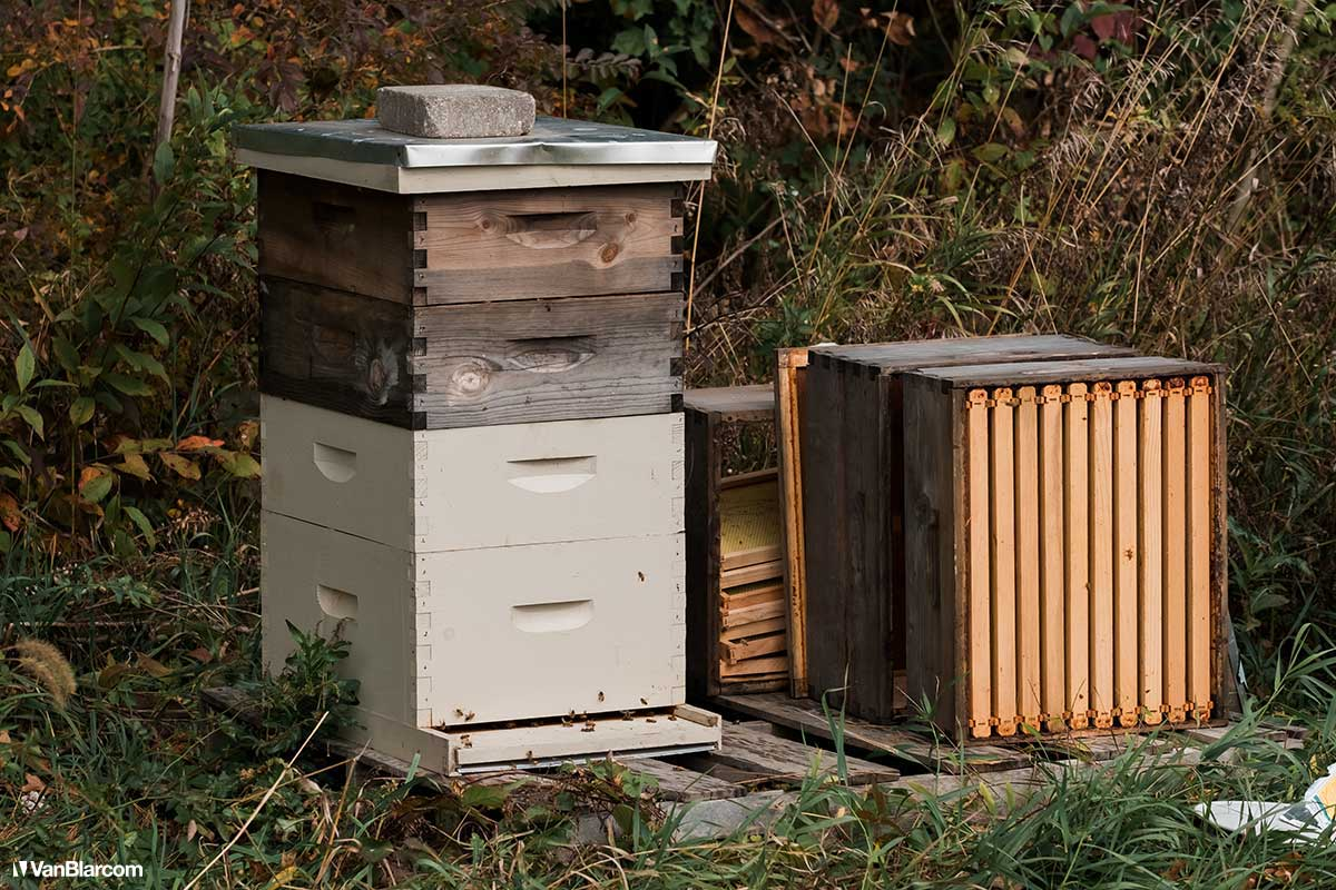 Peterson Farm Apiary